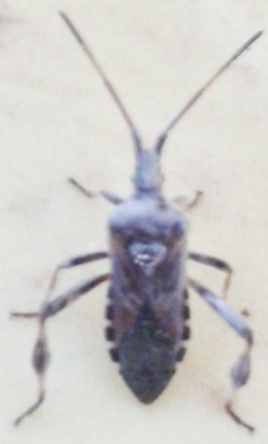 Insect Identification