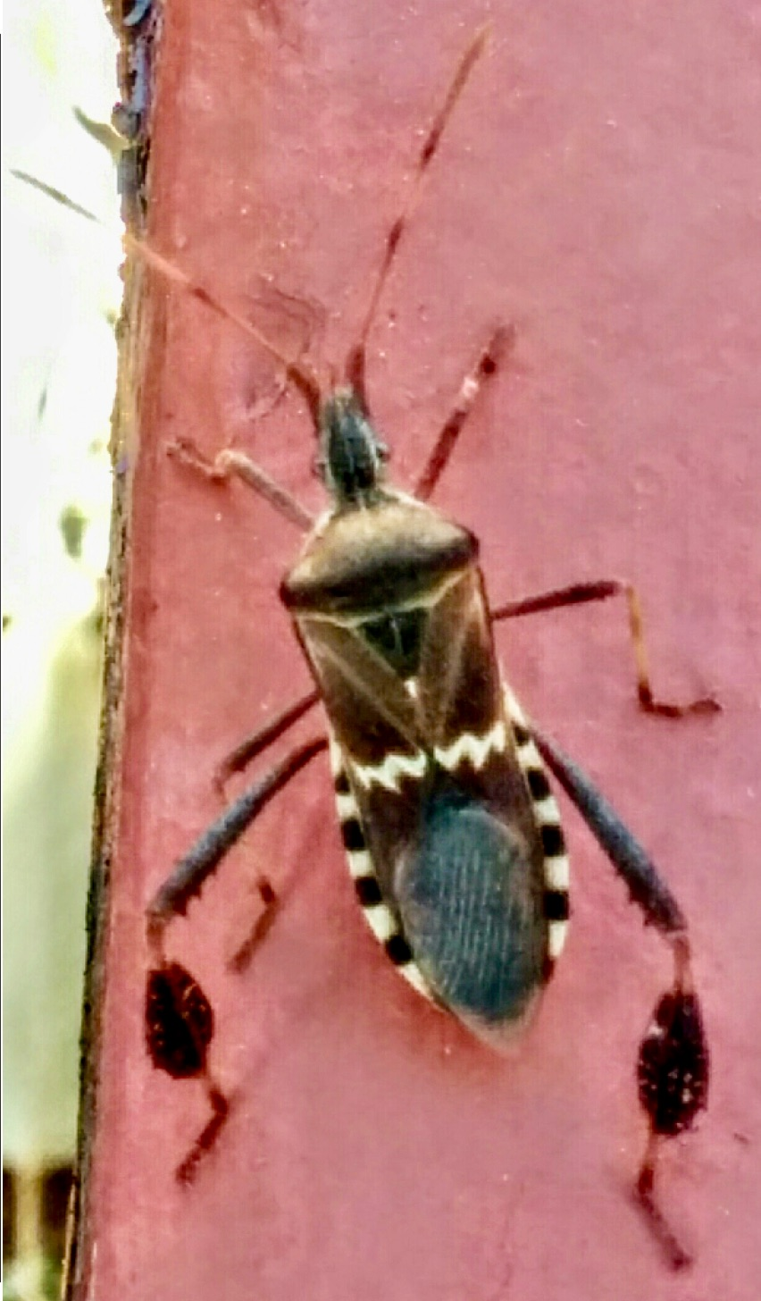 Elegant ... Tiny Red Bugs On Patio By Insect Identification ...