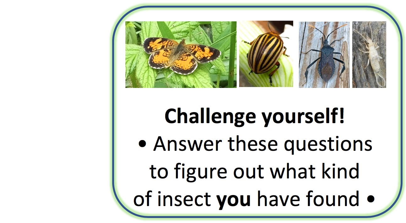 Insect Identification Key: A Guide to the Insects